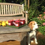 bed-and-breakfast-Berkshire-Reading-Newbury-dog-6065 Fenn