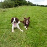 bed & Breakfast Hereford Ross on Wye dogs 1792Jones_C