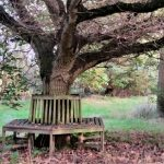 bed-breakast-lincolnshire-sleaford-kirkstead