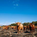 bed-breakfast-scotland-oban-benderloch-shenavalie-farm-1966Buchanan