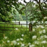 bed-and-breakfast-surrey-cranleigh-high-edser-garden-2046Franklin-Adams