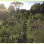 bed-and-breakfast-suffolk-bury-st-edmunds-stowmarket-trees-2655Draper