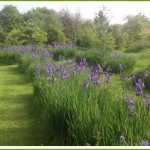 bed-and-breakfast-suffolk-bury-st-edmunds-stowmarket-lavender-2655Draper