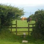 Bideford-Clovelly-Devon-horses-3542West