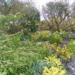 Wareham-Lulworth-Cove-Dorset-spring-garden-5060Brachi