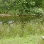 St-Austell-Truro-Cornwall-garden-7078Nancarrow