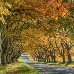 Great walks this Autumn