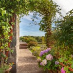 bed-and-breakfast-Haverfordwest-Broadhaven-Wales-clematis-1185Davies