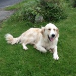 Hillview B&B Tulla Co Clare Dog 0514 Halpin