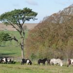 cumbria-bed-breakfast-hadrians_wall-the_knowe