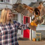 bed-breakfast-Snowdonia-Dolgellau-Dinas_Mawddwy-birds-of-prey