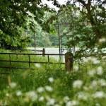 bed-and-breakfast-surrey-cranleigh-high-edser-garden-2046Franklin-Adams