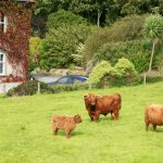 bed-breakfast-Ireland-Wexford-Waterford-Glendine-country-house-2514Crosbie