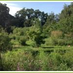 bed-and-breakfast-suffolk-bury-st-edmunds-stowmarket-garden-2655Draper