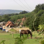 B&B Midhurst Chichester sussex loves farm