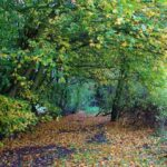 Nature Reserves for Autumn Days