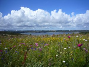 landscape_flowers_summer_meadow