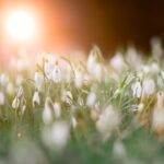 The Beauty of Snowdrops…