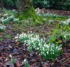 A welcome sign that spring is on its way ….