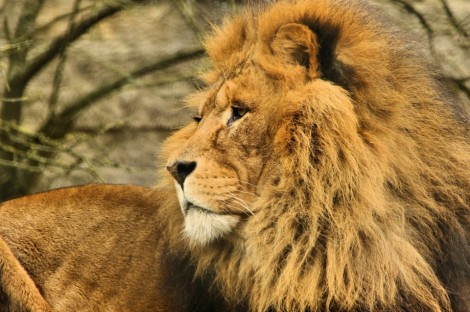 Interested in wildlife & conservation? Then a visit to Linton Zoo in Cambridgeshire is really a must